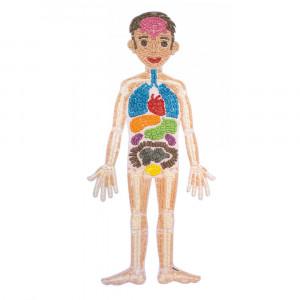 Playmais: Κάρτες ανατομίας σώματος 34τμχ. PLM-160745.1